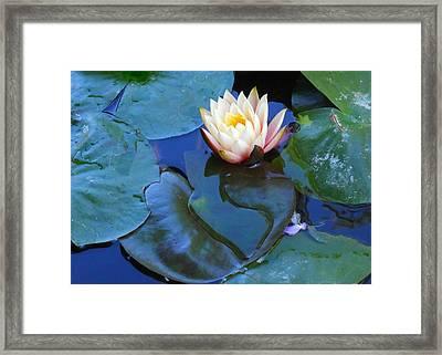 Lotus 2 Framed Print by Sarah Vandenbusch
