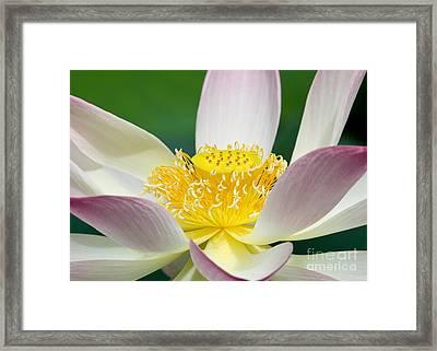 Lotus Up Close Framed Print by Sabrina L Ryan