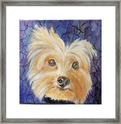 Louie Framed Print by Maureen Pisano