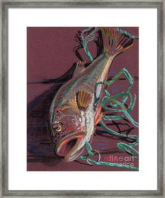 Louie's Catch Framed Print by Donald Maier