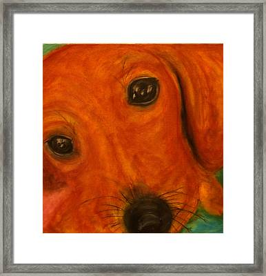 Lucy The Doxy Framed Print by Laura  Grisham