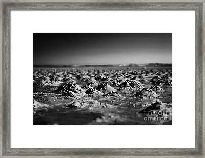 Lugworm Arenicola Marina Casts On Mudflats In Strangford Lough County Down  Framed Print by Joe Fox