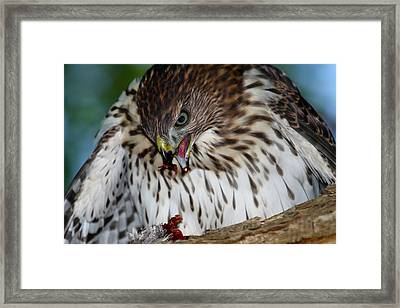 Lunchtime Framed Print by Paul Marto