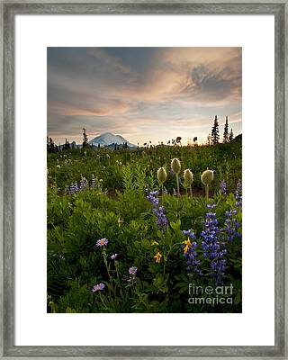 Lupine Sunset Framed Print