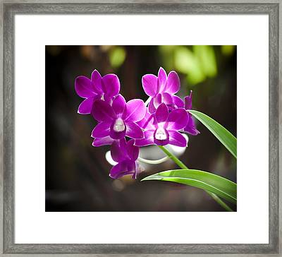 Magenta Orchids Framed Print by Joe Carini - Printscapes
