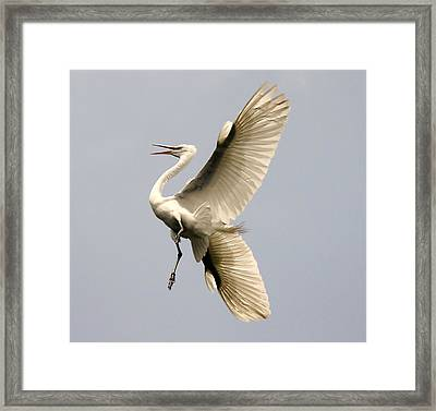 Magestic Framed Print by Paulette Thomas