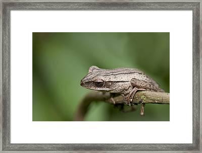 Malaysia Frog Framed Print