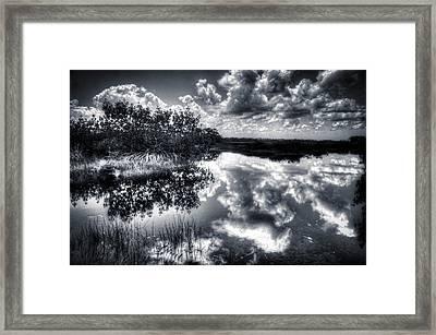 Mangroves In The Morning Framed Print by Bob Hartmann