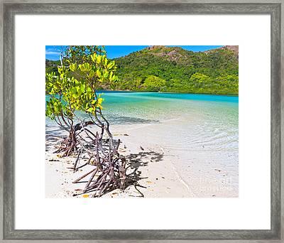 Mangroves Framed Print by MotHaiBaPhoto Prints