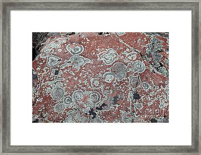 Map Lichen Framed Print by Ted Kinsman