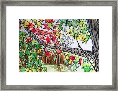 Maple Tree Sketchbook Project Down My Street Framed Print by Irina Sztukowski