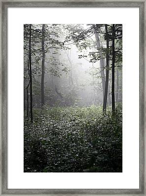 Misty Morning Framed Print by Rick Rauzi