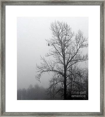 Misty Morning Vigil Framed Print by KD Johnson