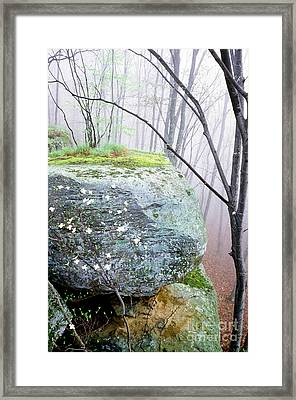 Misty Spring Morning Framed Print