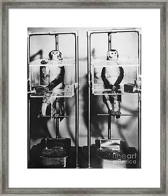 Monkey Behavioral Experiments Framed Print by Omikron