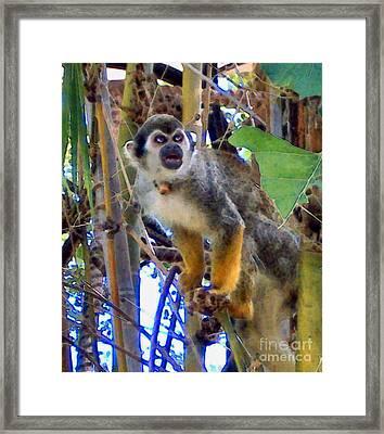 Monkeyshines Framed Print by Elinor Mavor
