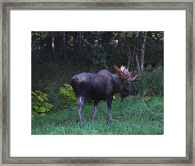 Framed Print featuring the photograph Morning Light by Doug Lloyd