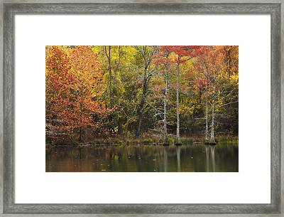 Morning Light In The Forest Framed Print by Iris Greenwell
