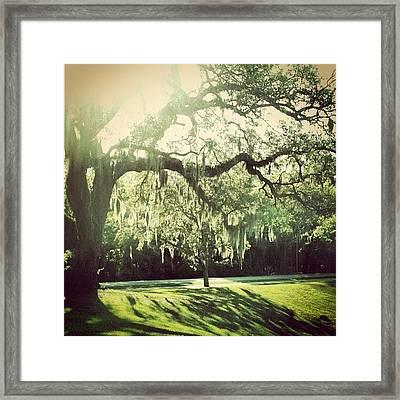 #moss #oaktrees #trees #beautiful Framed Print