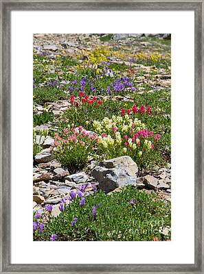 Framed Print featuring the photograph Mother Nature's Master Garden by Katie LaSalle-Lowery