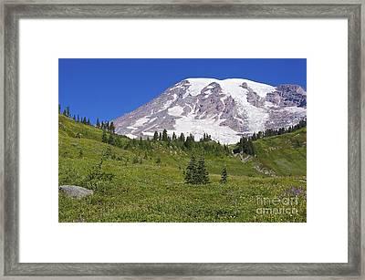 Mount Rainier Meadow Framed Print by Sean Griffin