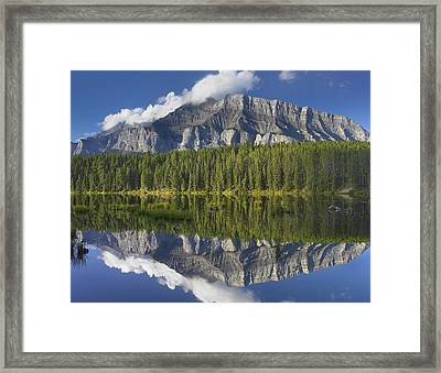 Mount Rundle And Boreal Forest Framed Print by Tim Fitzharris