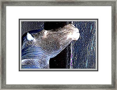 Mule  Framed Print by Anand Swaroop Manchiraju