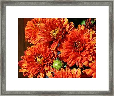 Mums The Word Framed Print by Bruce Bley