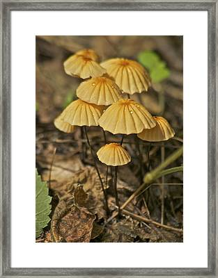 Mushrooms Framed Print by Michael Peychich