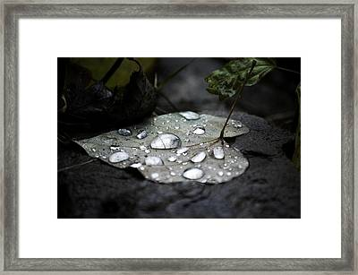 Framed Print featuring the photograph My Heart Weeps by Peggy Franz