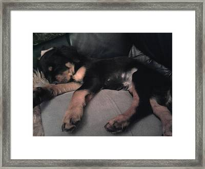 Framed Print featuring the photograph My Sleepy Pup by Susan  Solak