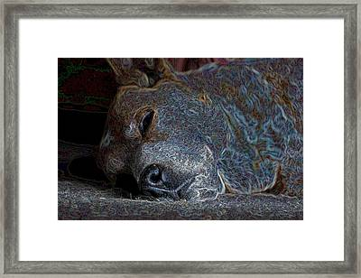 Nap Time Framed Print by One Rude Dawg Orcutt