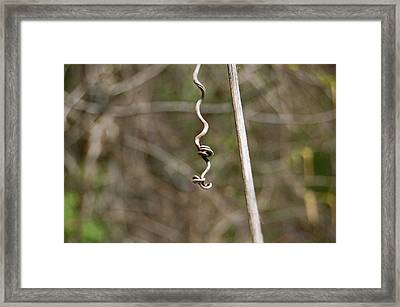 Framed Print featuring the photograph Nature's Art by Mary McAvoy