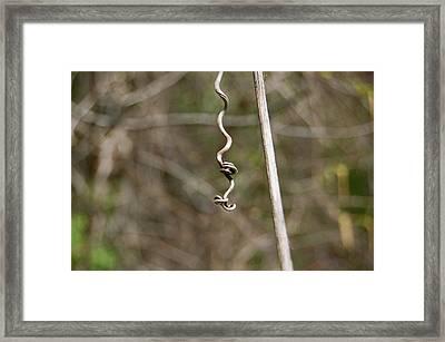 Nature's Art Framed Print