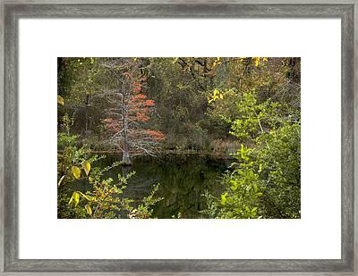 Natures Frame Framed Print by Cindy Rubin