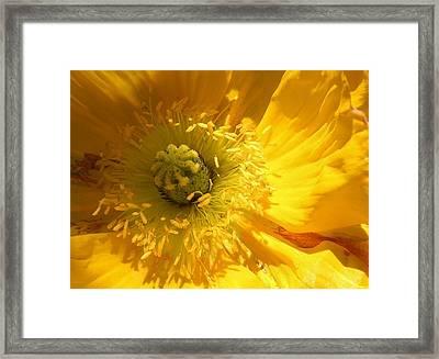 Natures Wonder Framed Print by Bruce Bley