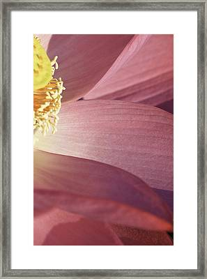 Framed Print featuring the photograph Nelumbo 'red Scarf' by Perla Copernik