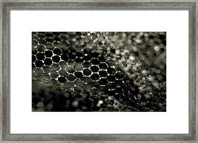 Netting Framed Print by Catherine Morgan
