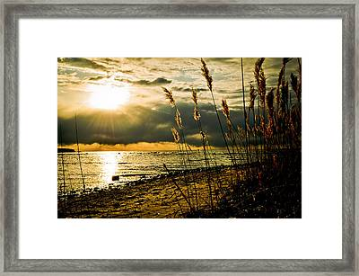 New Beginnings Framed Print by Jason Naudi Photography