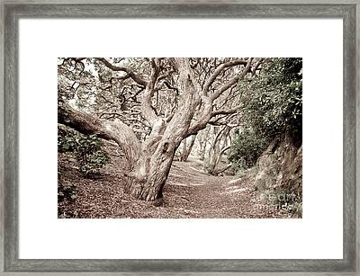 New Zealand Rainfores With Pohutukawa Trees Framed Print