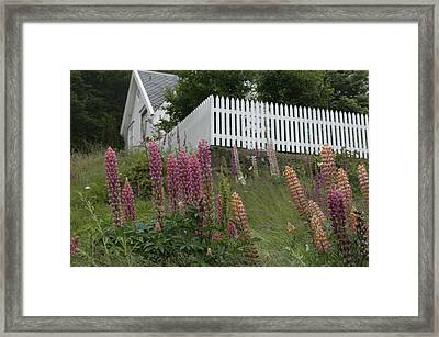 Norway, Hidra, Lupins And Lilies Framed Print by Keenpress