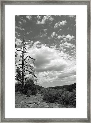 Oak Creek Canyon Framed Print by Lauri Novak