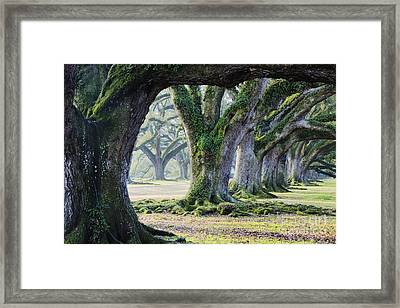 Old Growth Trees Framed Print by Jeremy Woodhouse