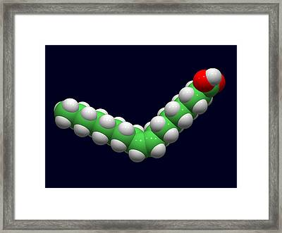 Oleic Acid, Computer Model Framed Print by Dr Tim Evans