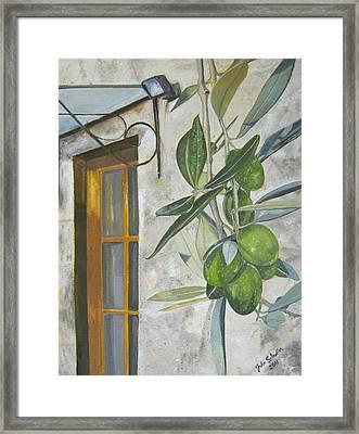 Olives In Tuscany Framed Print by John Schuller