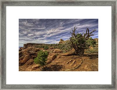 On The Edge Framed Print by Stephen Campbell