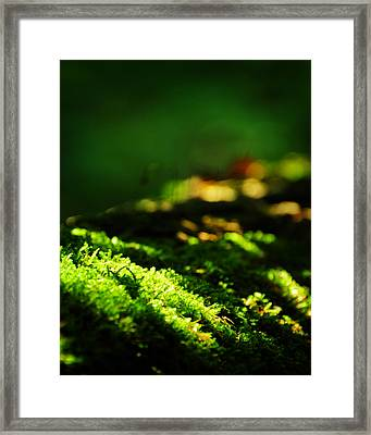 One Hundred Ways Framed Print by Rebecca Sherman