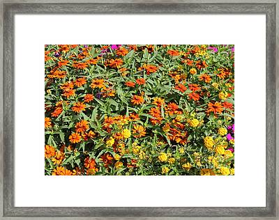 Orange And Yellow Framed Print by Theresa Willingham