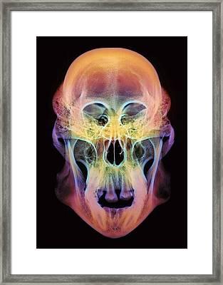 Orangutan Skull Framed Print by D. Roberts