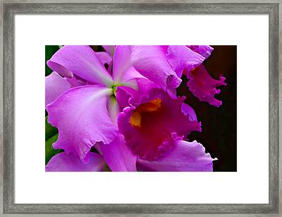 Orchid 5 Framed Print by Julie Palencia